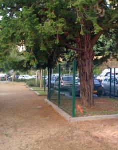 Prix Ubu 2009 pour un arbre emprisonné à Morlaix